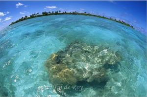 Pacific Remote Islands Marine National Monument Expanded to 490,000 Square Miles