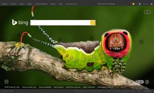 Puss Moth Caterpillar on Todays BING Seach Home Page