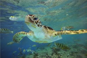 May 23 2014 is World Turtle Day