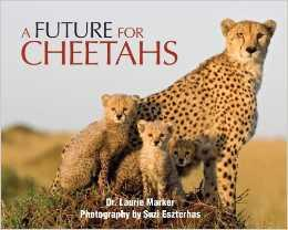 BBC Wildlife Features A Future for Cheetahs